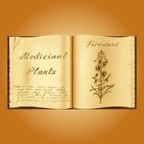 Épilobe Illustration botanique Centrales médicales Livre ouvert d'Old de herbalist de livre illustration stock