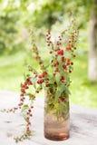 Épinards de fraise Photographie stock