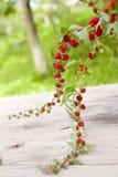 Épinards de fraise Images stock