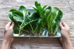 Épinards frais dans le plat Concept de préparation de repas Aimez, sain, concept d'écologie, horizontal Photo stock