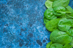 Épinards frais de bébé sur un backround bleu Image libre de droits