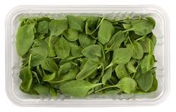Épinards verts de chéri dans un cadre clair Photos stock