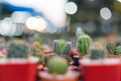 Épine de cactus dans la texture rouge de fond de pots photos stock