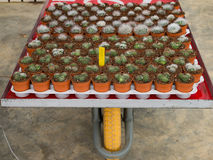 Épine et fleur de cactus Image libre de droits