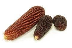 Épis colorés de maïs éclaté Photographie stock