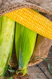 Épis de blé Images stock