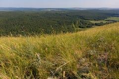 Épis de blé balançant dans le vent sur la montagne Images stock