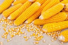 Épis de blé mûrs Images stock