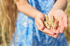 Épis de blé mûrs dans les paumes de filles Photo stock