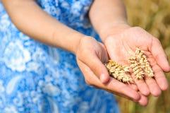 Épis de blé mûrs dans les paumes de filles Image stock