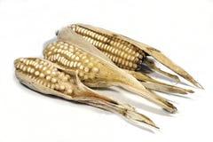 Épis de blé secs d'une culture échouée Photos libres de droits