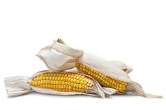Épis de blé sur un fond blanc Photo libre de droits