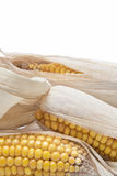 Épis de blé sur un fond blanc Photographie stock