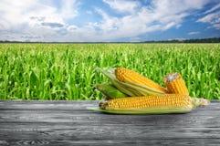 Épis de maïs épluchés contre un champ de maïs photographie stock