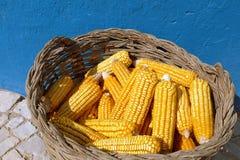 Épis de maïs Photographie stock libre de droits