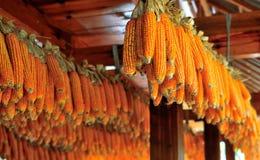 Épis de maïs Photo libre de droits
