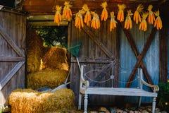 Épis de maïs accrochant pour sécher avec le fond de la vieille fenêtre Photographie stock