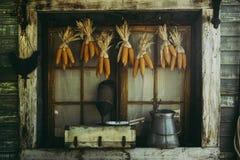 Épis de maïs accrochant pour sécher avec le fond de la vieille fenêtre Image stock