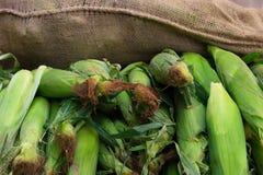 Épis de maïs au marché de ferme Photographie stock