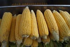 Épis de maïs bruts Image libre de droits