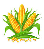 Épis de maïs d'isolement illustration stock