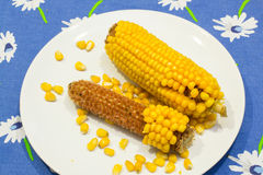 Épis de maïs dans un plat Photographie stock libre de droits