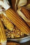 Épis de maïs - maïs-grain image stock