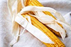 Épis de maïs secs Images stock
