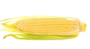Épis de maïs sur le fond blanc Image stock