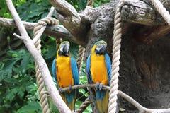 Épluchez des perroquets images libres de droits