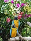 Épluchez des perroquets Images stock