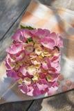 Época de hortensias imágenes de archivo libres de regalías