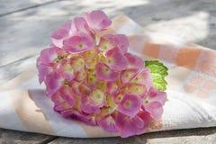 Época de hortensias imagen de archivo