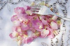 Época de hortensias imagen de archivo libre de regalías