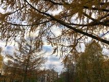 A época do outono na cidade Imagem de Stock