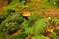 Éponge dans une forêt avec un chapeau brillant photographie stock