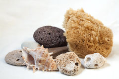 Éponge de mer pour se baigner, ponce, pierres de mer. coquille Photos libres de droits