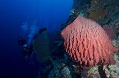 éponge de Poêle-pipe et groupe de plongeurs photographie stock