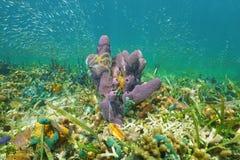 Éponge de vie marine avec le banc d'étoiles fragiles et de poissons Images stock