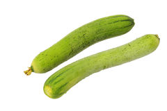 Éponge végétale de courge d'éponge (cylindrica Roem de luffa ) Image stock