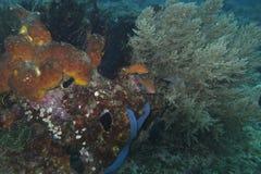 Éponges et corail de mer outre d'île de Balicasag, Bohol Philippines photographie stock libre de droits