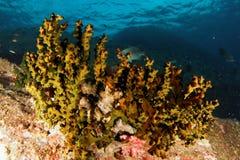 Éponges - mer d'Andaman Image libre de droits