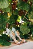 Épouser des chaussures d'une jeune mariée dans les feuilles d'un arbre de kiwi Photographie stock libre de droits