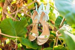 Épouser des chaussures d'une jeune mariée dans les feuilles d'un arbre de kiwi Images stock