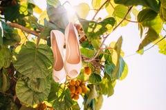 Épouser des chaussures d'une jeune mariée dans les feuilles d'un arbre de kiwi Images libres de droits