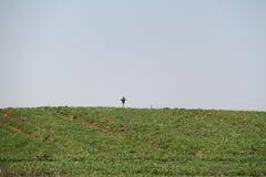Épouvantail au-dessus d'un champ vert Image stock