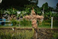 Épouvantail de foin ; foin-homme image libre de droits