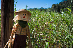 Épouvantail par un labyrinthe de maïs Photographie stock
