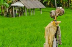 épouvantails dans le domaine de riz Image libre de droits
