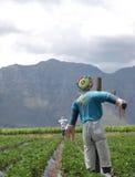 Épouvantails dans un domaine de fraise Image libre de droits